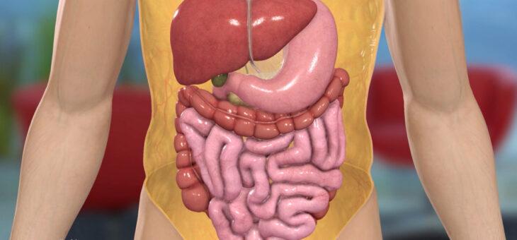 Darmentzündungen