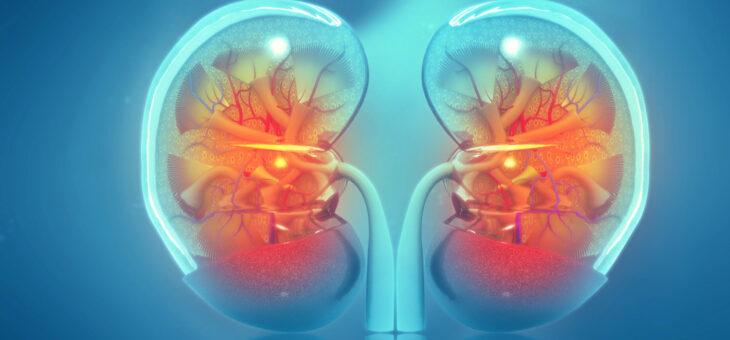 Die Niere kann nicht repariert werden